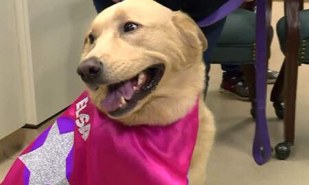 Uplifting - Dog Receives Life-Saving Kidney Transplant From Her Puppy