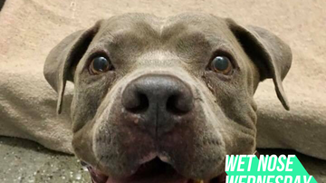 Wet Nose Wednesday - Meet Brock: Your New Loyal Companion!