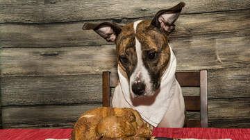 JP - LIST: Thanksgiving Food That May Be Harmful To Your Dog