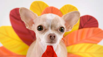 Toby Knapp - THANKSGIVING: Do NOT feed these foods to your DOG!