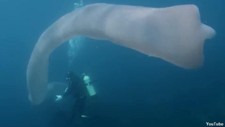 Watch: Divers Encounter Giant 'Ghostly' Sea Creature