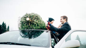 JP - Here's The Best Day To Buy Your Christmas Tree!