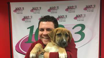 Steve Allan Pet of the Week - Let's Help My Adopt A Pet, Arnold Get His New Family