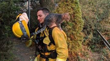 Maui - Cat Becomes Instant Friends With Fireman Who Saved Him From Wildfires