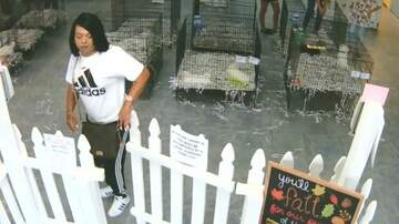 Trevor D in the Morning Show - Guy Disguised Himself as Convincing Woman to Buy Puppy with Stolen Puppy