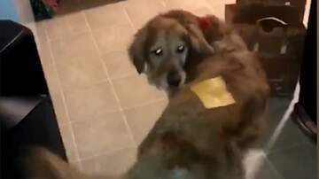 The Dave Ryan Show - Strange New Viral Trend - The Dog Cheese Challenge