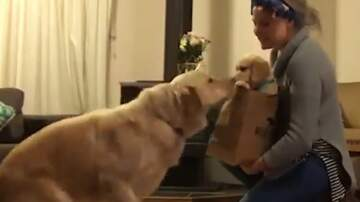 Jake Dill - Dog Surprised with New Puppy