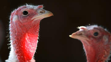 Mike Trivisonno - Tens Of Millions Of Turkeys To Wind Up On Dining Room Tables