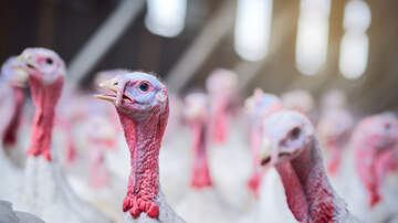 Marco - Tiny Turkeys Are All The Craze This Year