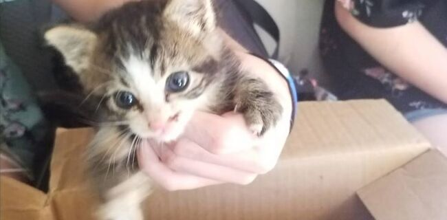 A kitten dumped in Ross County was adopted by its rescuers, and the dumpers were caught.