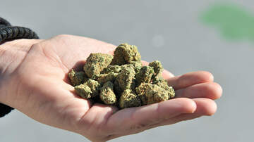 None - Asheville Prepping For Possible Marijuana Sales