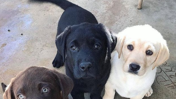 Producer Brent - Can You Name The Top 5 Most Instagrammed Dog Breeds?