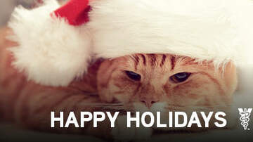 Pet Planet - Easy Tips For Your Pet's Safety This Christmas!
