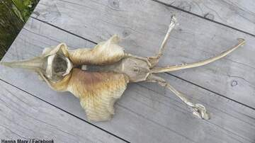Coast to Coast AM with George Noory - 'Alien' Sea Creature Washes Ashore in New Zealand
