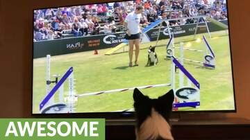 Mikey - WATCH: Border Collie Watches Herself on TV!