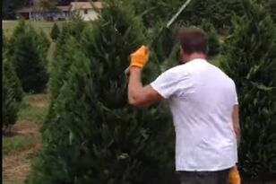 Man Trims Trees with Ninja Like Precision
