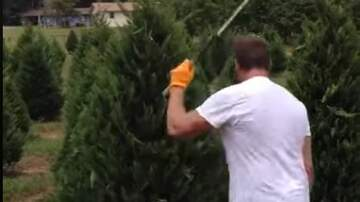 Jake Dill - Man Trims Trees with Ninja Like Precision