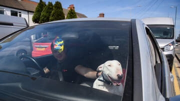 The Kuhner Report - Is driving with a dog on your lap distracted driving?