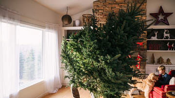 Steve Wazz - How to Keep a Christmas Tree Fresh for as Long as Possible