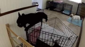 Katie Price - This Pup Is A True Escape Artist