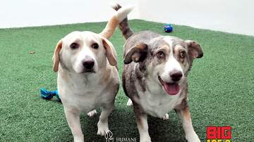 Doc Reno - Doc's Dogs of the Week- Mickey and Minnie