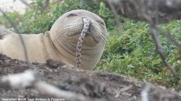 Coast to Coast AM with George Noory - Seal Gets Eel Stuck in Nose