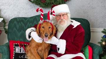 Blaine - Homes For The Holidays Adoption Event At Aiken County Animal Shelter!