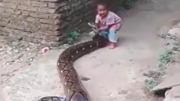 Chuck Dizzle - Toddler Has No Fear Playing With Huge Python!