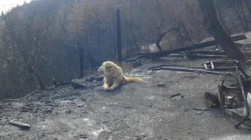 Uplifting - Dog Patiently Waits Weeks For Owners To Return Home After Deadly Camp Fire