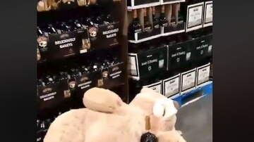 Hitman - Never put Huge Teddy Bears Near the Liquor at Costco..LOL