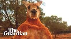 Maverick - Roger...the legendary Ripped Kangaroo has died.