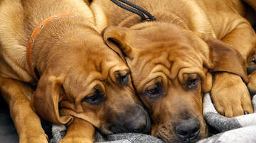 Angie Martinez - What Are Dogs Allergic To?