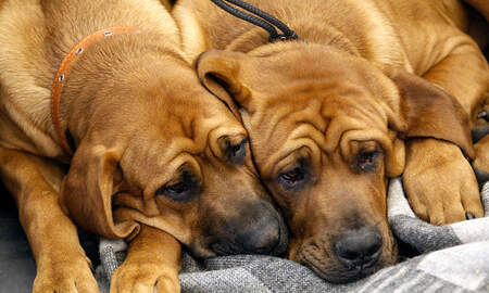 Angie Martinez - What Are Dogs Allergic Too?
