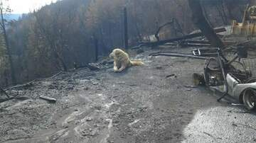 Klinger - Dog Waited Weeks For Owners To Return To Home Burned By California Wildfire