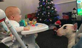 Steve & Gina's Blog - Baby Thinks Mooching Pooch Is Hilarious