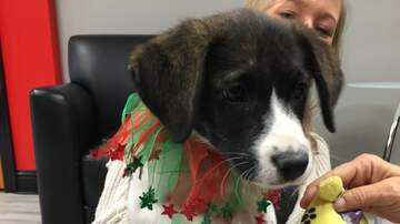 Pet of the Week - Nova is our Pet of the Week from Humane Society of South Mississippi