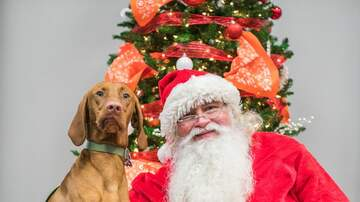 Photos - Subaru Spokesdog December 1st