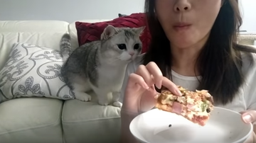 JB - Kitty REALLY Wants Pizza