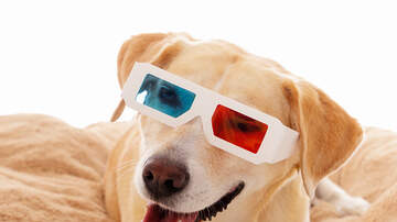 The Kane Show - There is Now a Theater Chain That Allows Dogs!