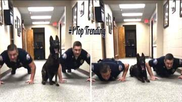 Rockin' Rick (Rick Rider) - A Police Dog That Does PUSH UPS!  (VIDEO)
