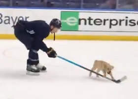 Sheri Van Dyke - Adorable!  Pup On The Ice With Blues Player!