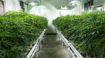 Bob Lonsberry - LONSBERRY: What Becomes Of Pot Dealers?
