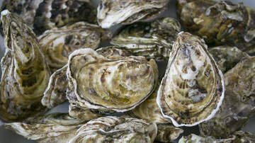 WJBO Local News - Houma Men Busted For Harvesting Oysters In Polluted Area