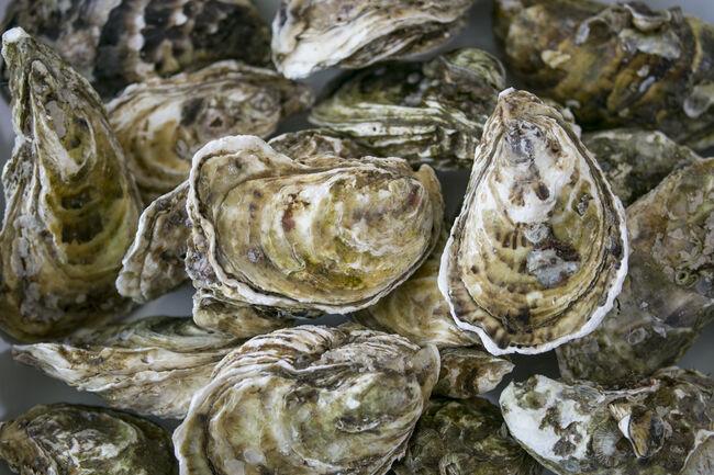 Oyster Getty RF
