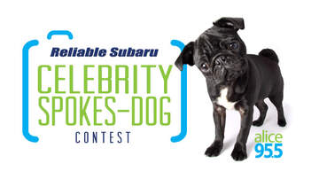 Photos - Reliable Subaru's Celebrity 2018 Spokes-Dog Contest Winners!