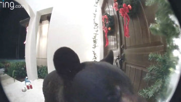 McKay and Donuts - (VIDEO) Hey, Who Ordered The Bear For Christmas Delivery?