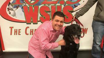 Steve Allan Pet of the Week - Let's Help My Pet Of The Week, Si!