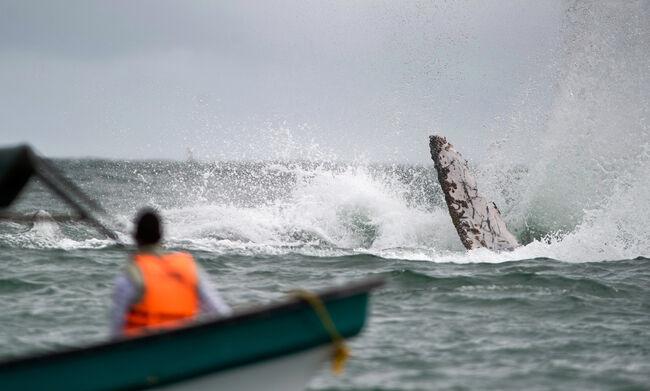 whale watching season begins