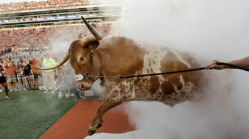 The KFAN Bits Page - Texas mascot topples barricade, charges Georgia bulldog | KFAN