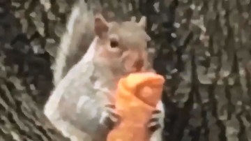 Mike and Mindy - Meet Egg Roll Squirrel! LOL!!